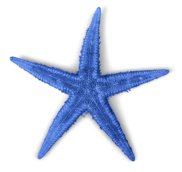 Star, fish, starfish.